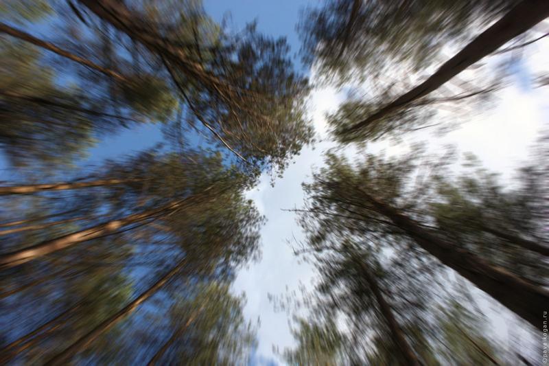 Растительность вокруг Ельчинского