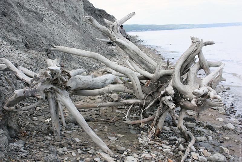 Корни деревьев в глине