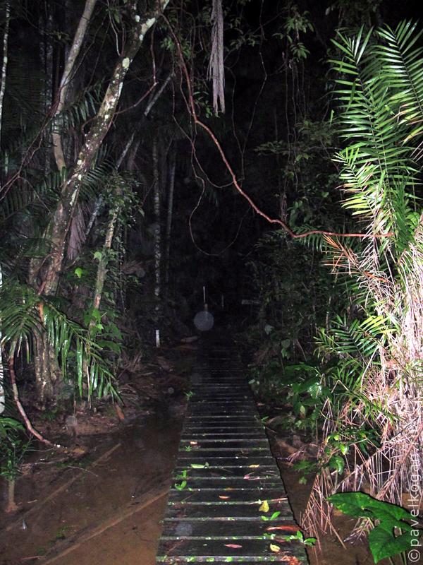Национальный парк Бако: ночная прогулка (8)
