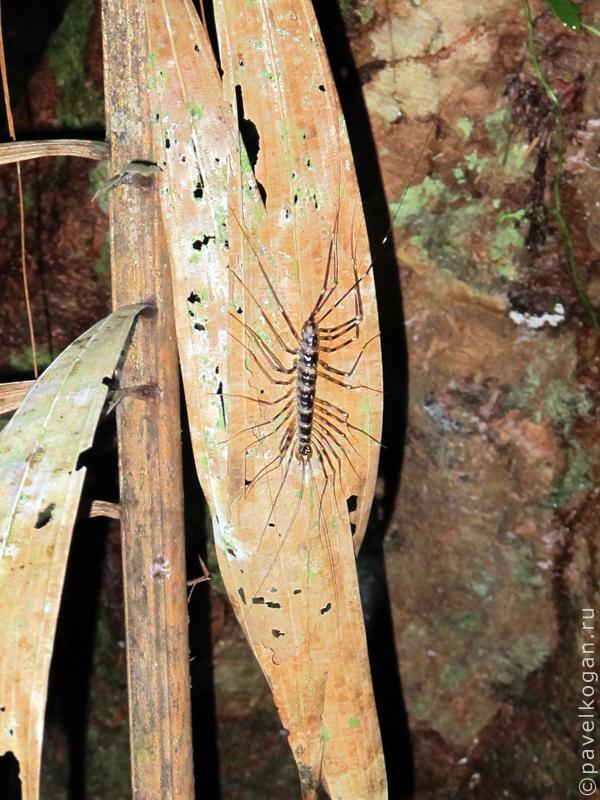 Национальный парк Бако: ночная прогулка (7)