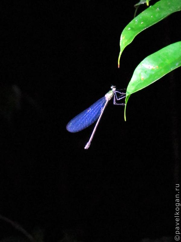 Национальный парк Бако: ночная прогулка (4)