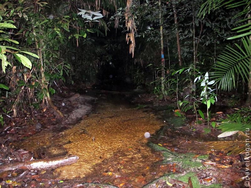 Национальный парк Бако: ночная прогулка (1)