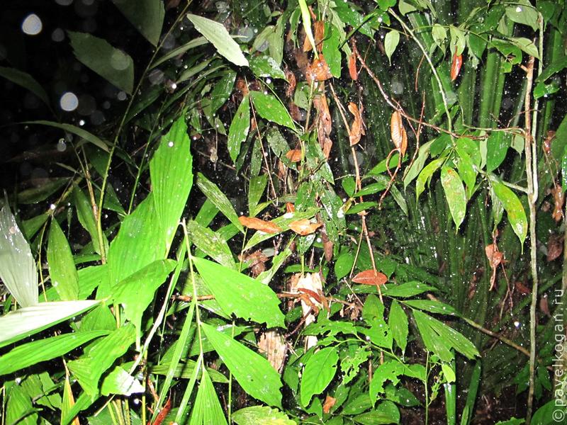 Национальный парк Бако: ночная прогулка (3)