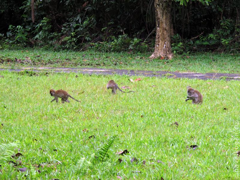 Национальный парк Бако: ночная прогулка (11)