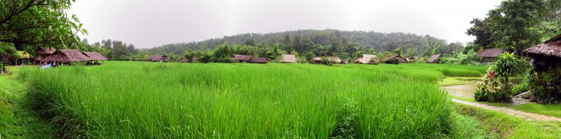Панорама тайского рисового поля